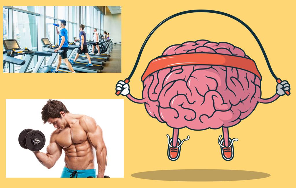 estudo musculacao fortalece cerebro